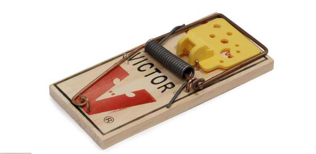 DIY mouse trap